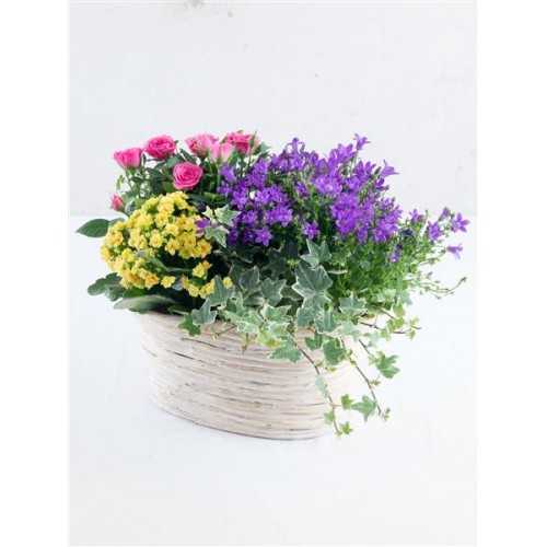 Beautiful Brights Flowering Planter