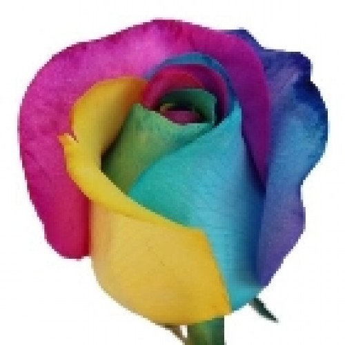 6 Rainbow Rose Basket Arrangement